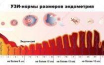Эндометрий перед месячными: как нарастает и в каком состоянии находится