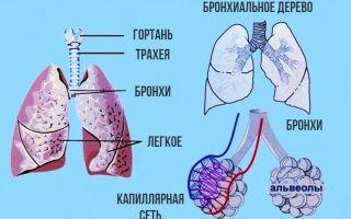Трахеит при беременности: причины и симптомы заболевания, диагностика и лечение