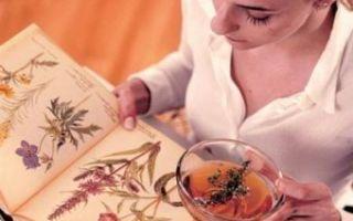 Душица при беременности: польза и вред