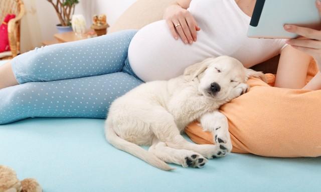 Варикоз матки при беременности: причины, симптомы, диагностика, лечение, профилактика