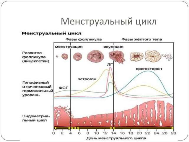 Зуд во время овуляции: норма или отклонение, лечения состояния