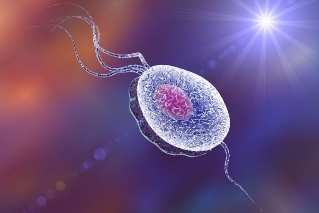 Плохой мазок при беременности: что значит, дисбиоз, кандидоз, кольпит, цервицит, гонорея, трихомониаз, лечение, профилактика