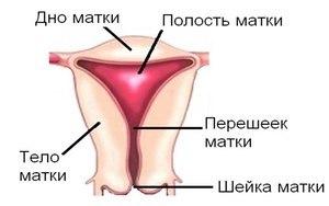 Жидкость в матке: где находится, диагностика и лечение