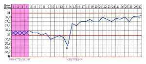 Момент Чуда: тест на овуляцию, принцип действия, инструкция