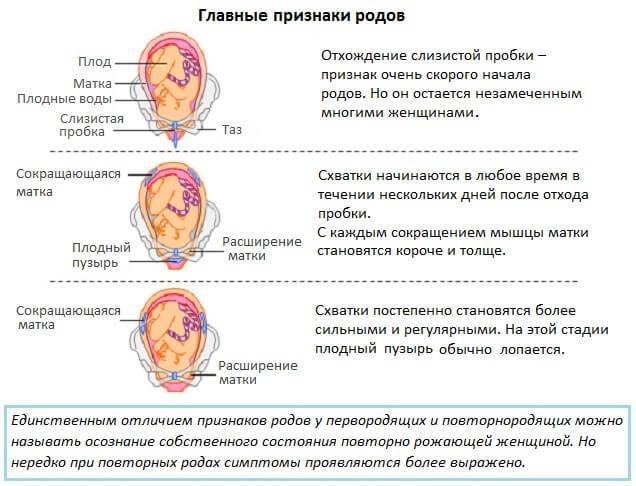 Признаки родов при первой беременности: когда они появляются, самые распространенные признаки, отсутствие предвестников