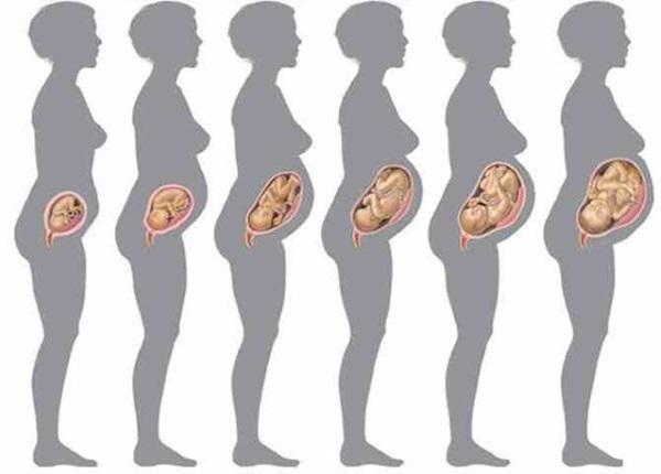 Прибавка в весе при беременности по неделям: норма и отклонения, таблица