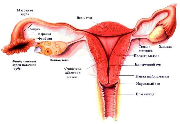 Боли при внематочной беременности: причины, симптомы и способы терапии