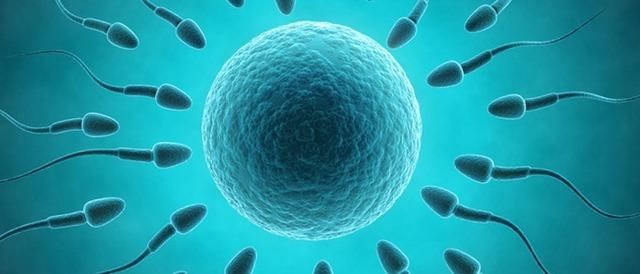 Совместима ли гиперплазия эндометрия и беременность?