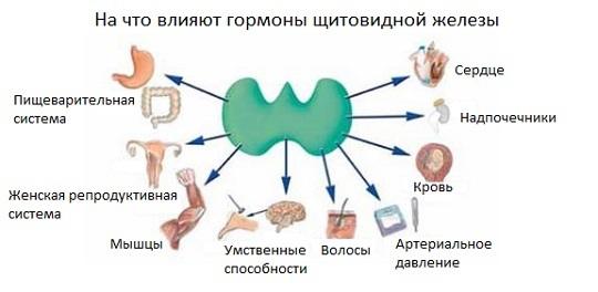 Гипотиреоз и бесплодие: взаимосвязь и особенности