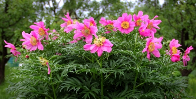 Травы при миоме матки: какие можно применять?