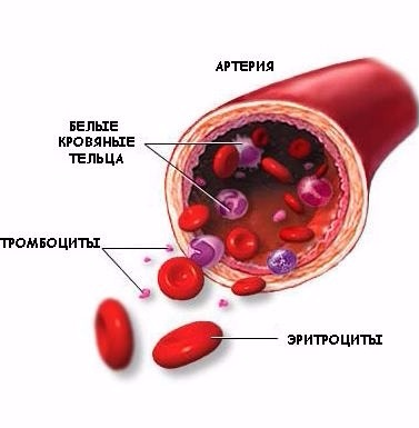 Повышенные тромбоциты при беременности: причины и методы терапии