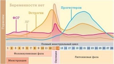 Каждый ли месяц происходит овуляция: зависит ли от возраста?