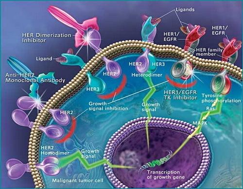 Гормонотерапия при лечении рака матки: особенности