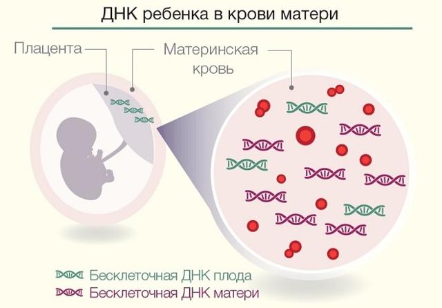 Анализ на уродство при беременности: кому назначается, когда проводится, что выявляет?
