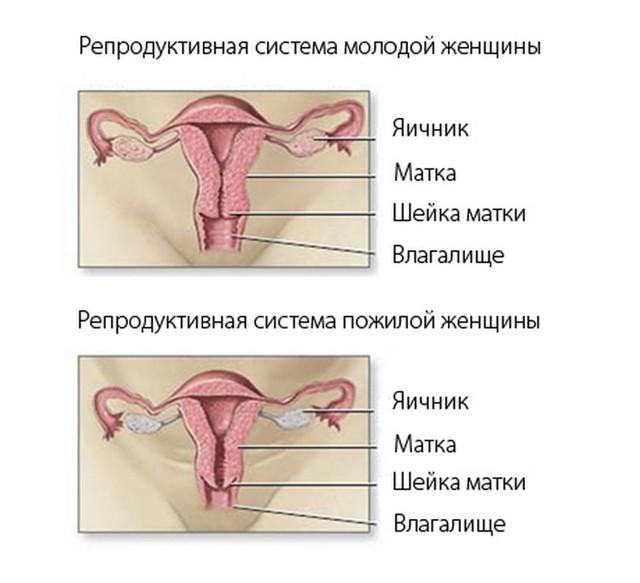 Яичники при климаксе: возможные патологии этого органа