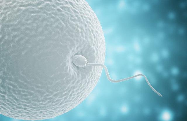Сколько живет яйцеклетка после овуляции: как определить, что влияет