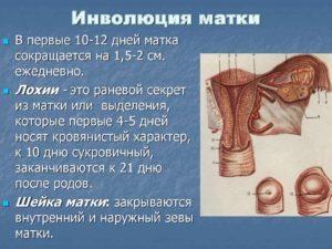 Субинволюция матки: почему возникает, как проявляется, терапия
