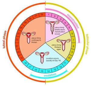Овуляция есть, а беременность не наступает: причины, как ускорить?