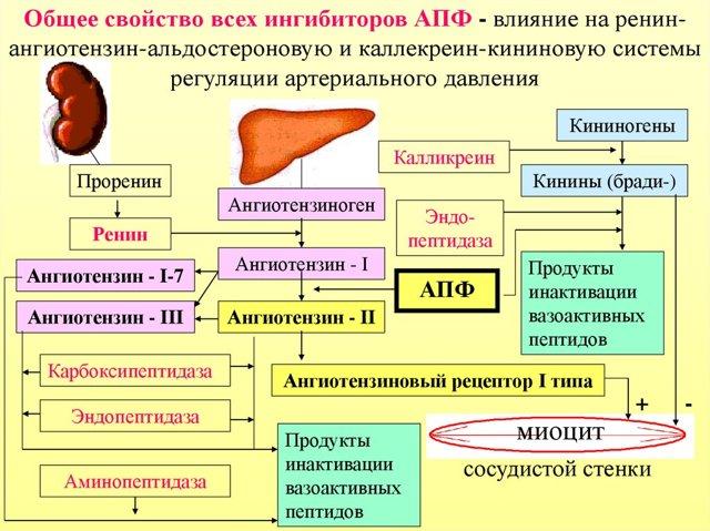 Синдром Дауна: признаки при беременности, диагностика