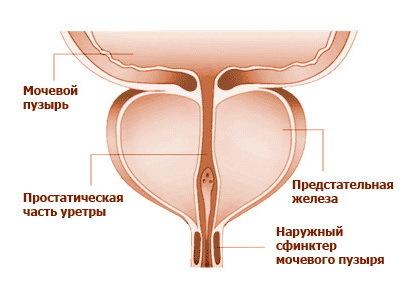 Кишечник давит на матку: причины и лечение патологии