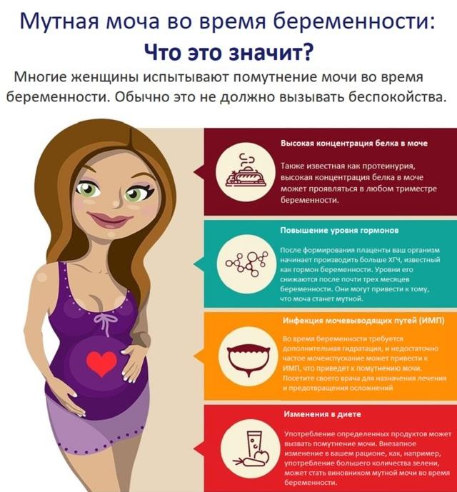 Мутная моча при беременности: причины, чем грозит, лечение, профилактика