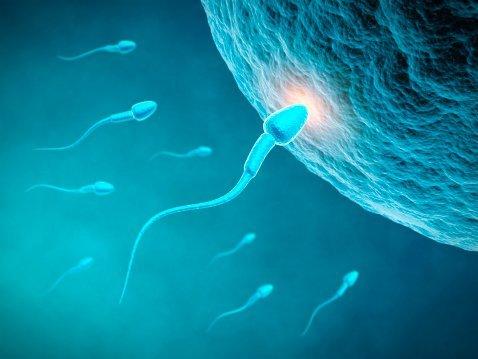 Сколько живут сперматозоиды в матке? Какие факторы влияют на это?