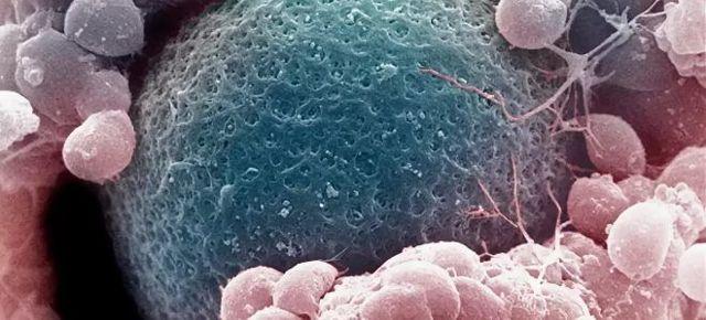 Ощущения при имплантации эмбриона в матку: нормы и отклонения