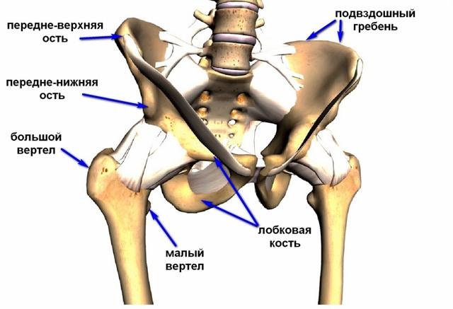 Расхождение костей таза при беременности: когда кости таза расходятся, причины, симптомы, как происходит процесс