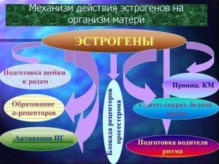 Дивигель при беременности: можно ли, противопоказания, побочные действия, инструкция