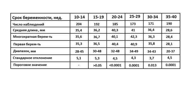 Длина шейки матки при беременности на разных сроках: отличия