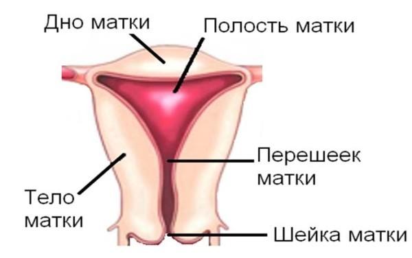 Рабдомиома матки: особенности, строение, лечение