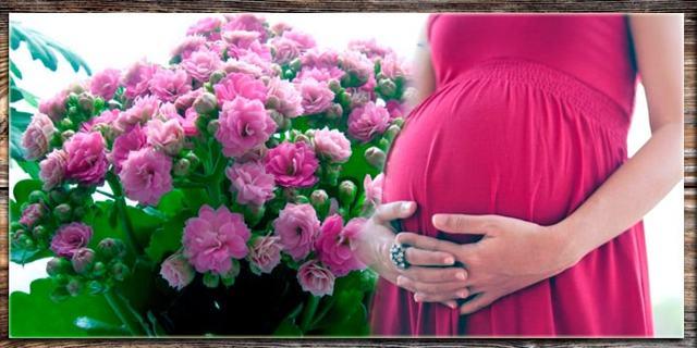Каланхоэ при беременности: можно ли беременным, показания и противопоказания, инструкция по применению, аналоги