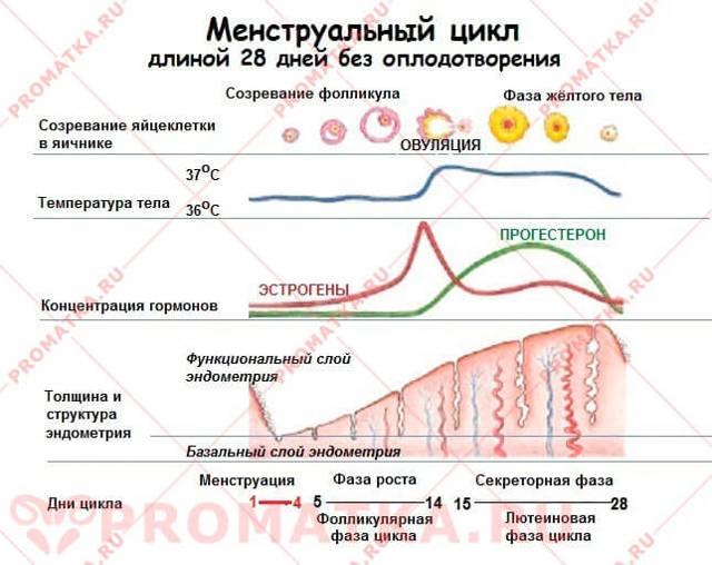 Патология полости матки, гиперплазия эндометрия