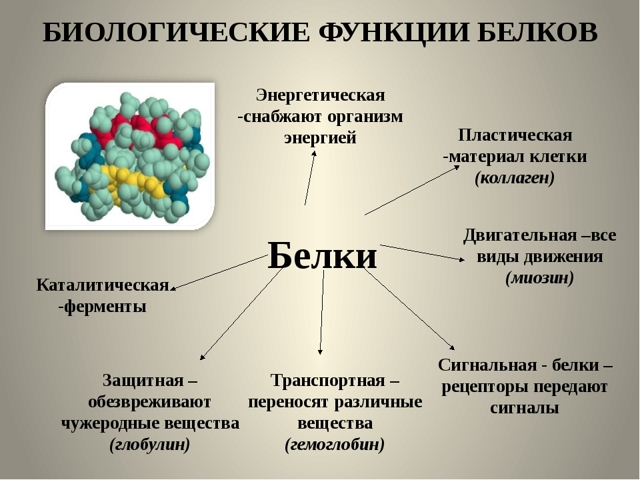 Фибриноген при беременности: нормы, отклонения, повышение, понижение, нормализация