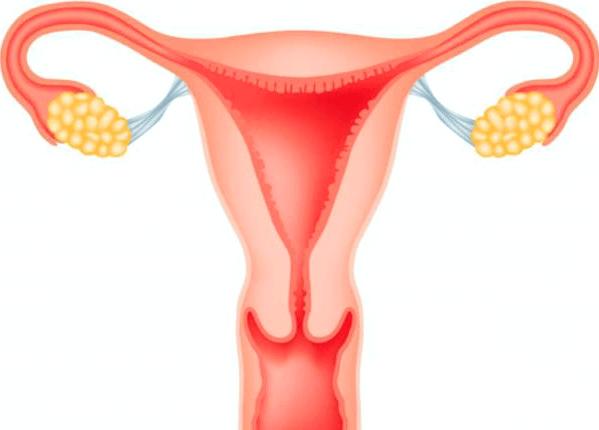 Толщина эндометрия при гиперплазии: норма и отклонение от нее
