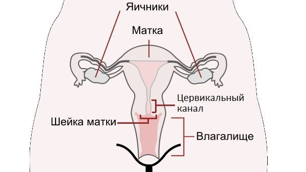Полип шейки матки: особенности развития, диагностика и лечение