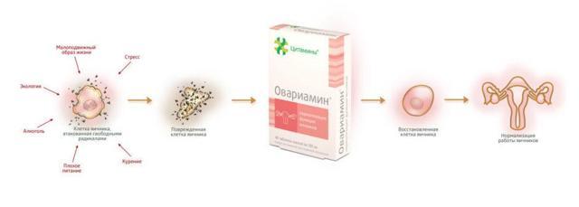 Овариамин при климаксе: состав, инструкция, побочные эффекты