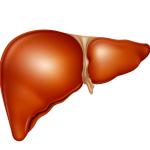 Расположение внутренних органов при беременности: половые, пищеварения, сердце и другие