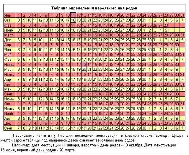 Календарь беременности по неделям, месяцам, триместрам