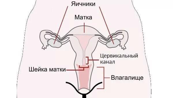 Беременность и бужирование