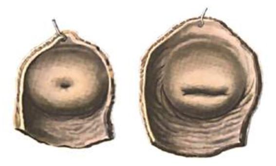Зев матки выполняет защитную функцию для организма женщины