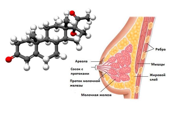 Прогестерон и овуляция: взаимное влияние, связь с гормоном