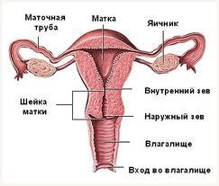 Открытие шейки матки при беременности: что это такое, преждевременное, симптомы, лечение, последствия