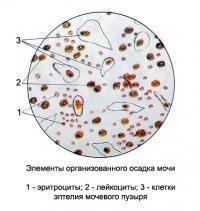 Повышены лейкоциты в крови при беременности: причины, чем грозит, как снизить, норма, профилактика