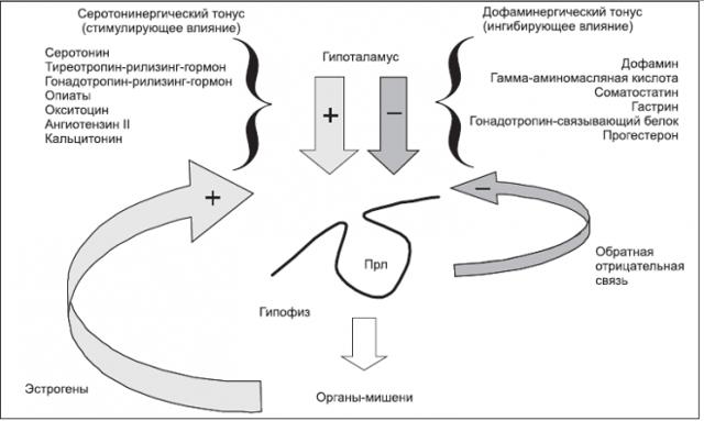 Пролактин и овуляция: взаимное влияние и взаимодействие