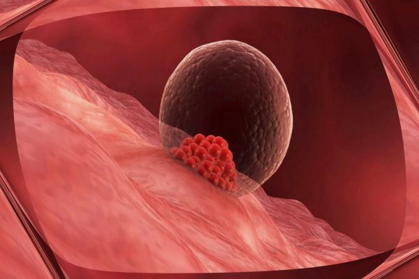 Прикрепление эмбриона к матке: как происходит и от чего зависит успешность?