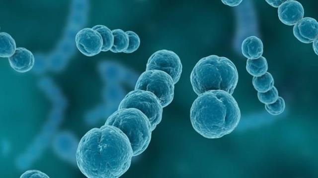 Стрептококк в мазке при беременности: причины, лечение, степень опасности