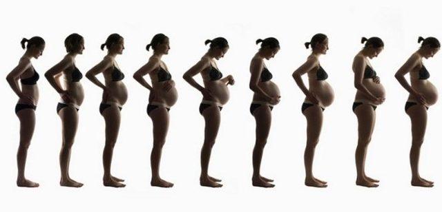 Когда начинает расти живот при беременности: когда начинает увеличиваться живот, нормы окружности живота по неделям
