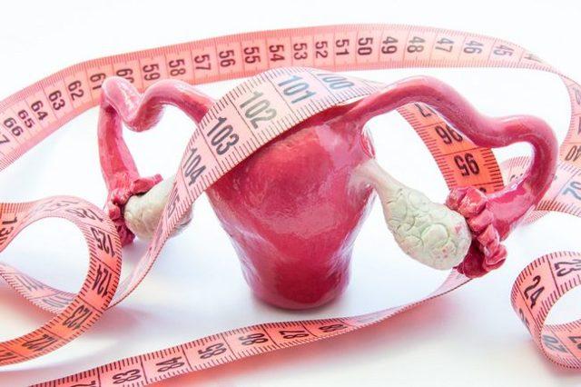 Размеры матки: нормы и отклонения, и их причины