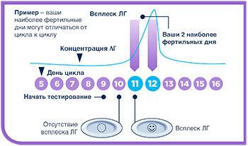 Эвитест на овуляцию: характеристика, инструкция, результаты